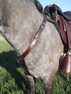 Winfield Breast Collar