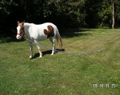 Stainless Horse Stakeout w/Rope