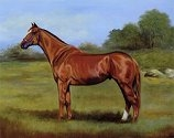 "Limited Addition Print ""Classic Thoroughbred"""